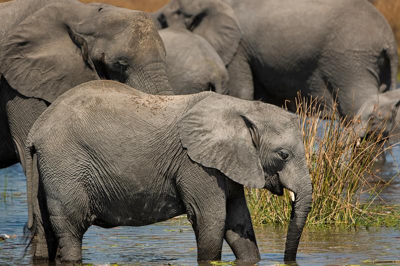 2014-08Aug-Okavango Masters-77-Edit.jpg