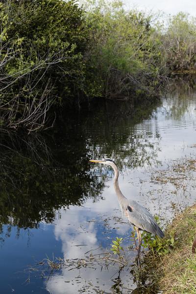 Everglades NP-0259-Select_E.jpg