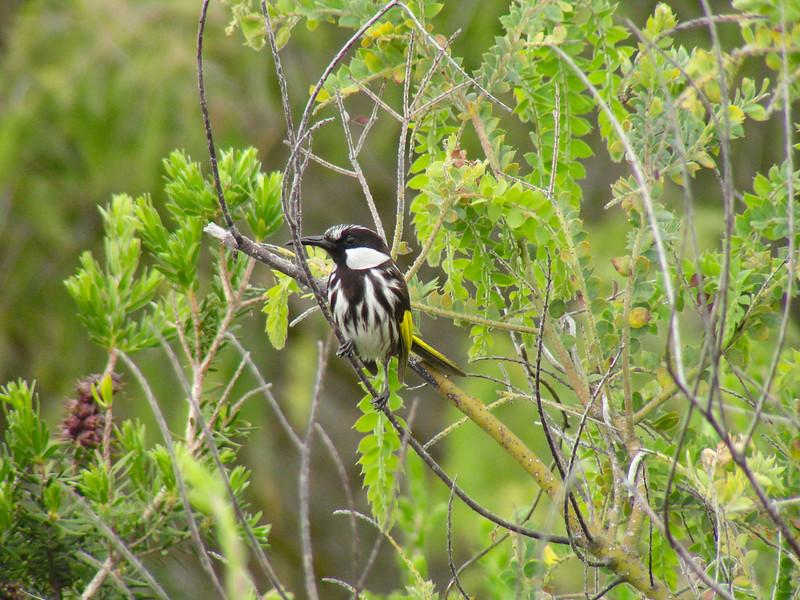 Big Swamp Reserve, Western Australia
