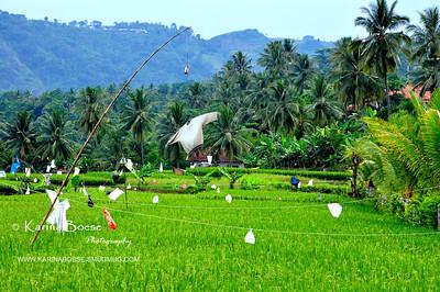 My Indonesia