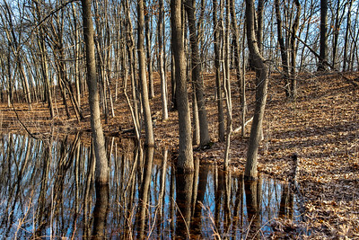 Cowles Bog in March