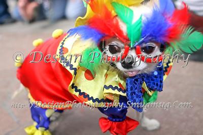 2011 Manitou Springs Carnivale Parade