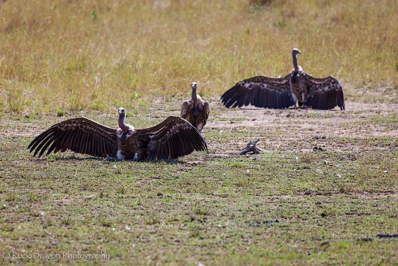 North_Serengeti-14.jpg