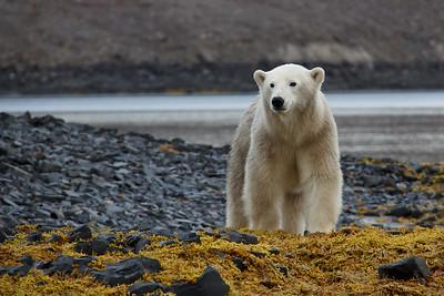 Nordøstgrønland 2011