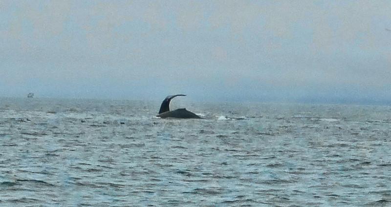 Moss Landing Whales 4.jpg