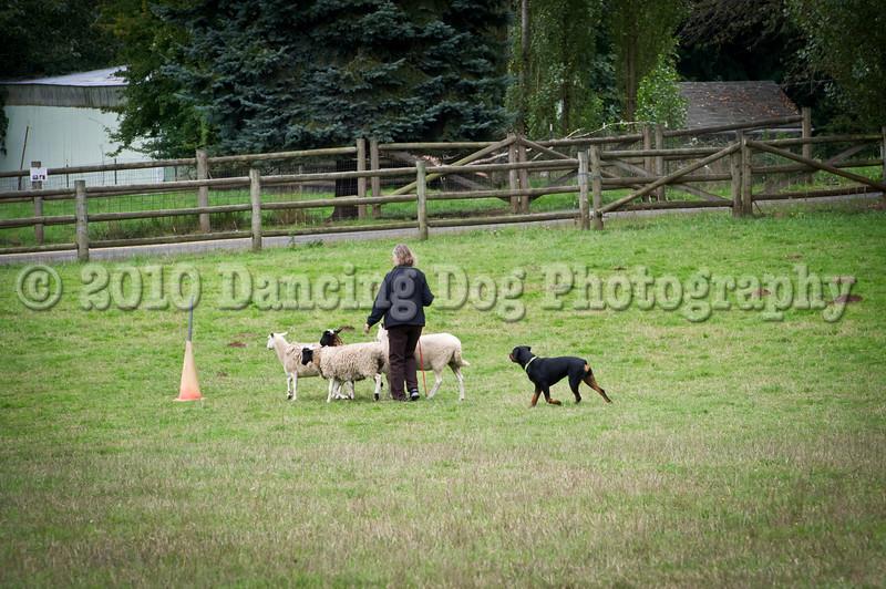 PacNW_HT_Sun_Sheep-6785