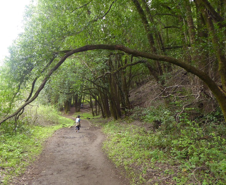 Running 'Neath the Arch