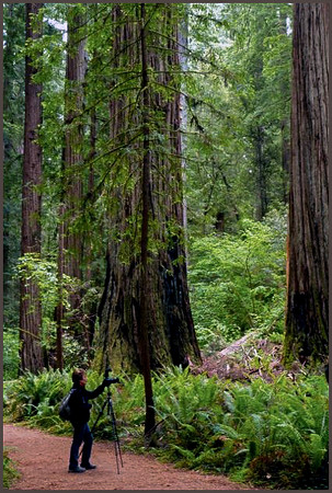 California Redwoods and Southern Oregon Coast