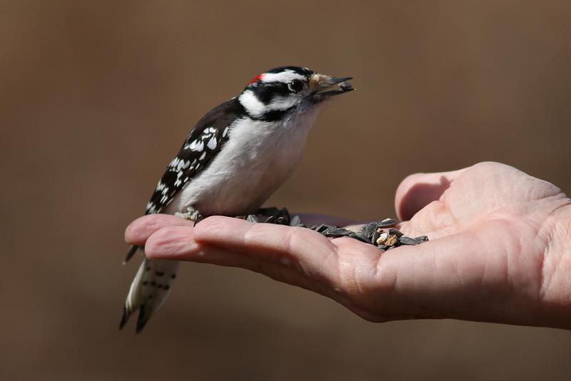 A woodpecker. At the Elizabeth A Morton National Wildlife Refuge.
