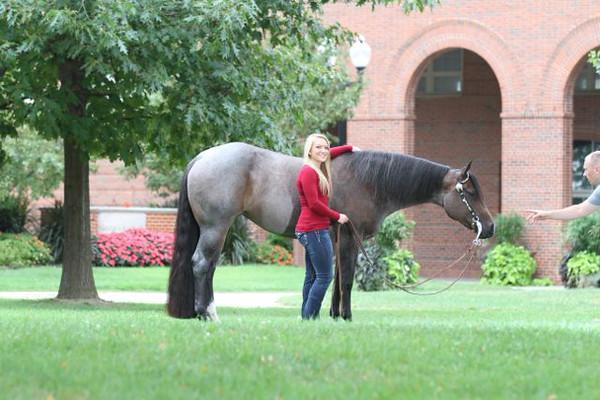 Lee Quarter Horses