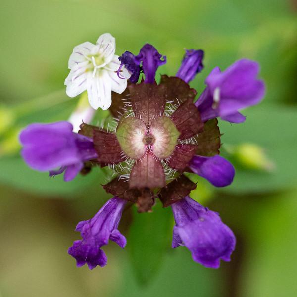 July Flowers I