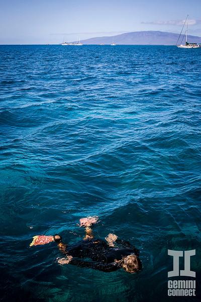 Lahaina snorkeling 10.jpg