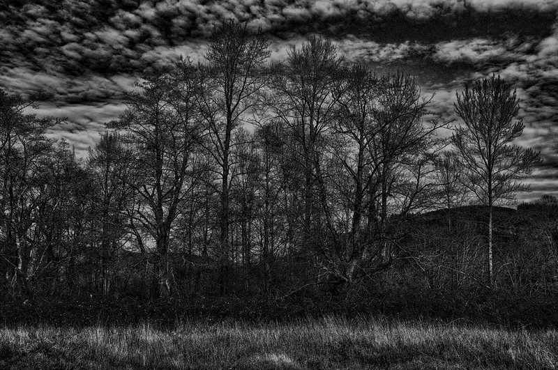 debay's_swan_reserve_00776_charcoal_forest-sm.jpg