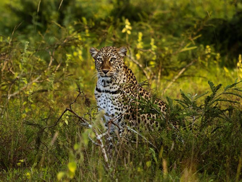 RichardTerborg_RwandaAnimals34.jpg