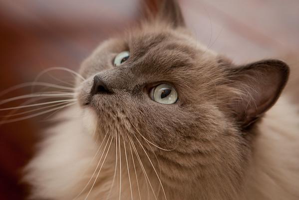 Archie | The Wonder Cat