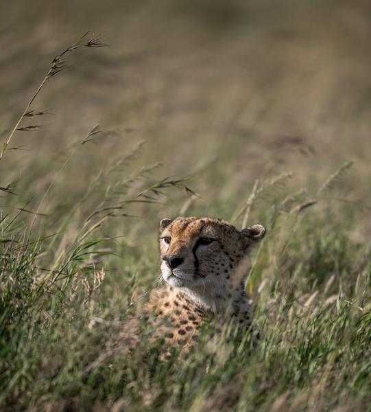 Tanzania_Feb_2018-851.jpg