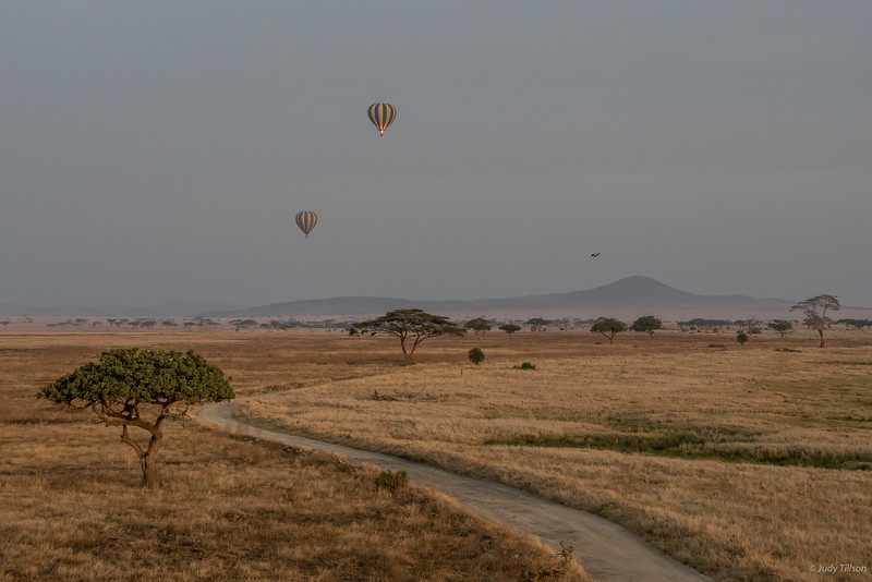 Hot Air Balloon Ride drifting along the Serengeti plains -6185.jpg