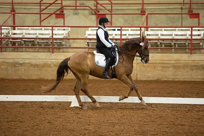 Horse 199