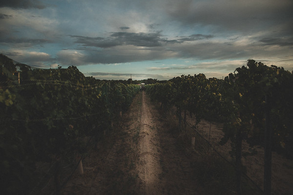 2020 Harvest | RGW Day 2 | Viognier | Malvasia Bianca