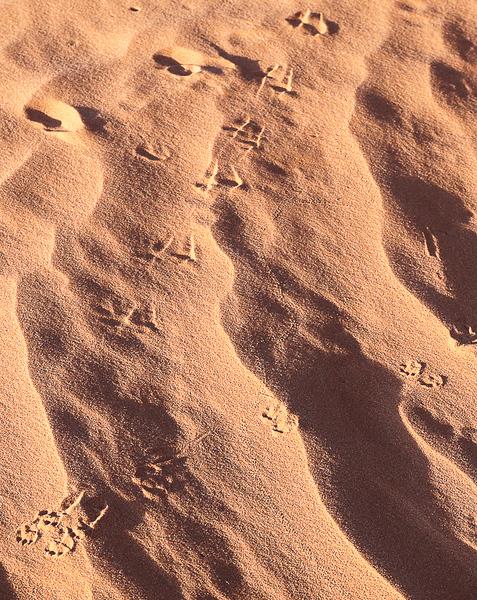 Footprints in the Sand_John Hoffman.jpg