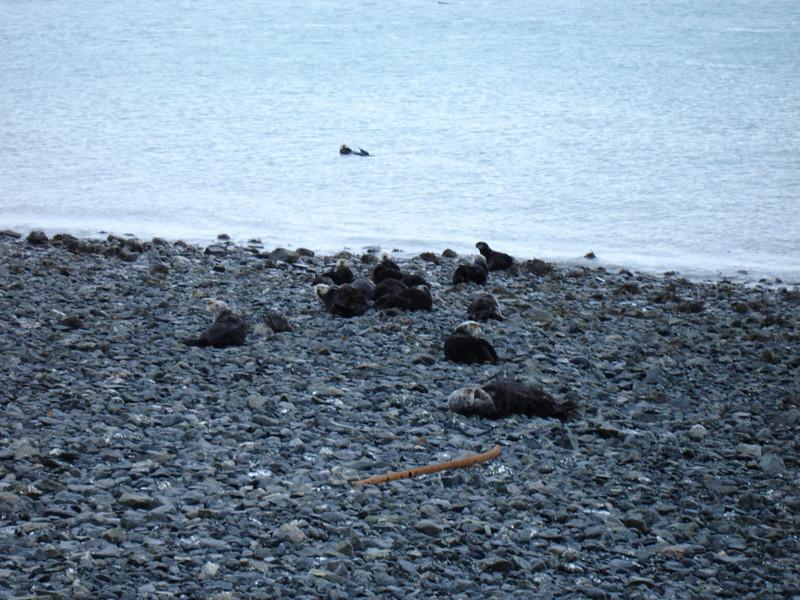 Alaska 2008 059.jpg