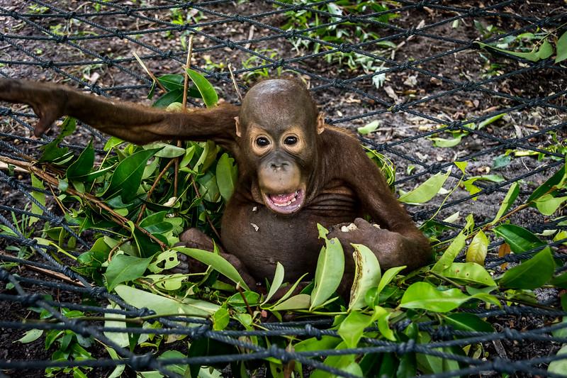 Borneo-2256.jpg