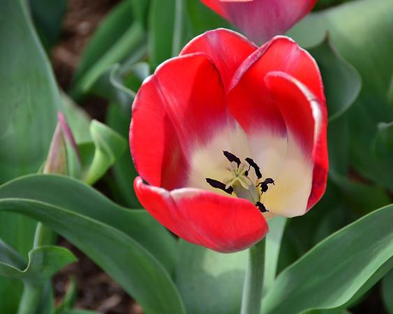 Willowwood Arboretum in bloom