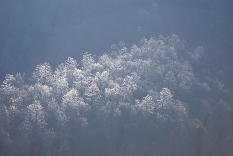 Afternoon sun on icy trees below Chimney Tops  GSMNP
