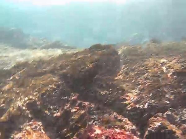 td-octopus2.AVI