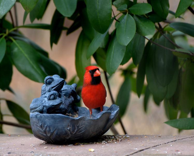 Cardinal dish 3.jpg