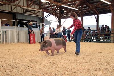 Market Swine 14