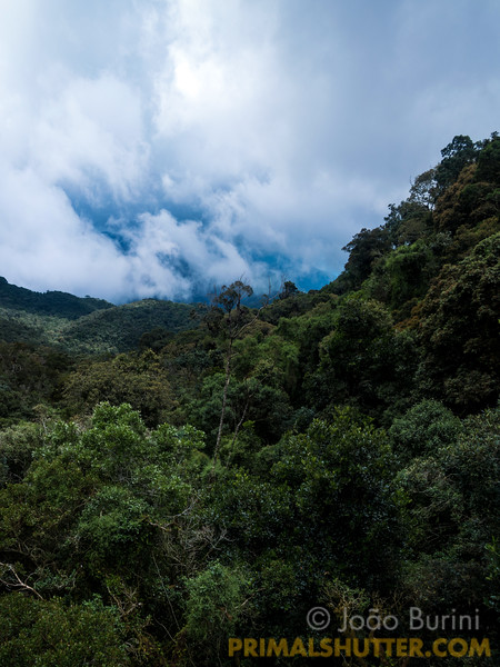 Brazilian atlantic forest landscape