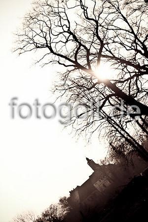 SCHLOSSPARK BÜDINGEN 20110308
