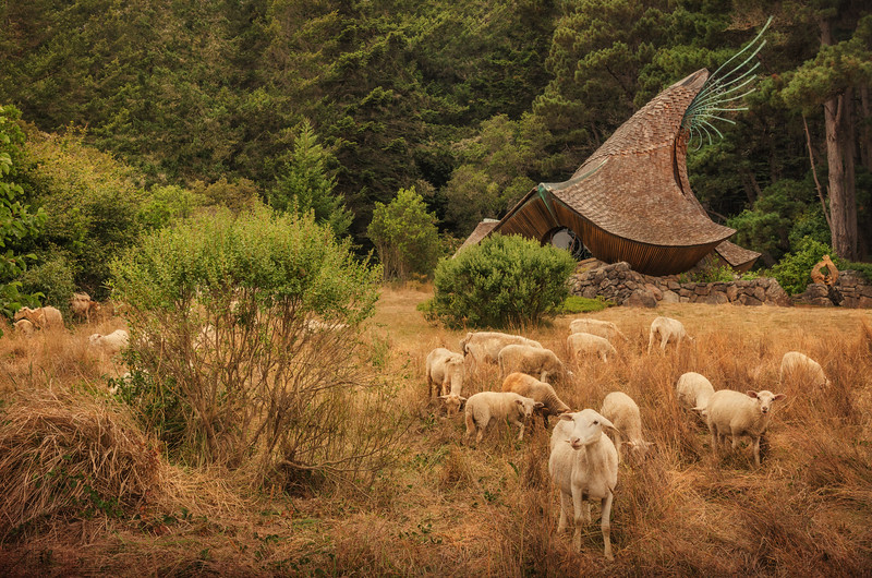 Sheep & Sea Ranch Chapel (Horz)