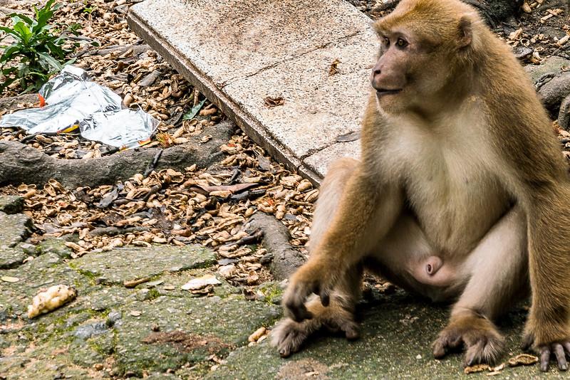 monkey-cave-2846.jpg