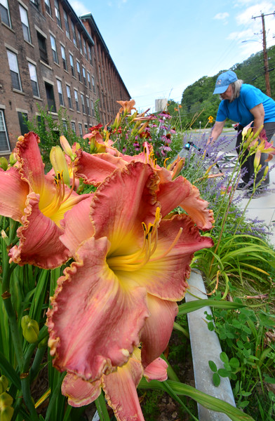 Tending the perennials - 081419
