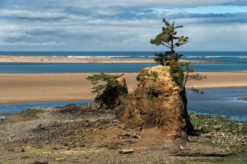 09 Jul 19	Roughly 3 hours (110 miles) south of Astoria on the Columbia River to Lincoln City - both in Oregon - on Highway 101 is Siletz Bay. This is a really lovely section of the Oregon coastline and well worth the drive to visit. There is much to see including the Siletz Bay Wildlife Refuge but we did stop to see any of it save for a brief shoot at one of the roadway pullouts. Directly offshore lies a major fault known as the Cascadia Subduction Zone. Apparently there was a major earthquake there on 26 Jan 1700, supposedly 9+ on the Richter scale which created a 50 wave (Tsunami) which struck the shoreline exactly 20 minutes later with many more waves to follow. Interestingly there was no scale for measurement back in 1700, no way to have measured the time it took to arrive nor the height of that wave, nor how many waves followed. Still, there is a big sign telling you all about this event and it is very specific in its information. Always nice to have a little humor on your travels!   Road sign apart, it is a lovely location and on the day of our visit bathed in bright sunshine and blown spotless by blustery winds accompanied by a delightful show of water vapor over an incoming tide. We made just this one stop as we were on our way to a zoo at the bottom of the state where we were to hold a variety of baby animals.  I straightened the original, cropped off a bit of needless material, and added a wee bit of contrast enhancement. Remains  Nikon D500; 18 - 200; Aperture Priority; ISO 500; 1/2000 sec @ f / 9.