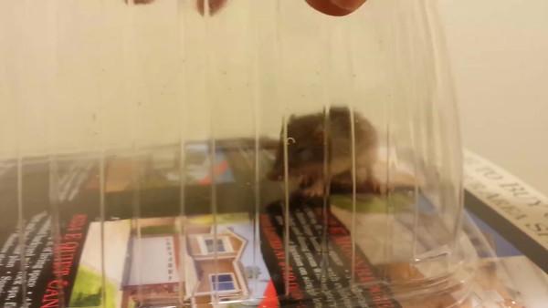 mouse capture 081914