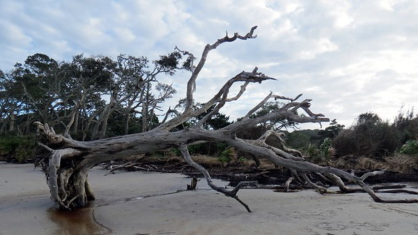 November 25:  The northern end of Driftwood Beach .  .  .