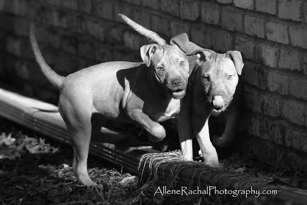 Tanya's puppies