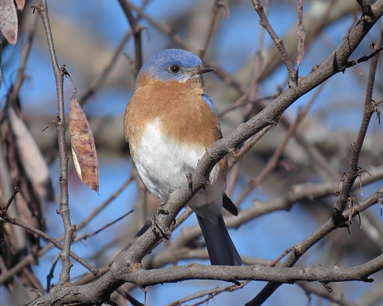 sx50_bluebird_bit_112.jpg