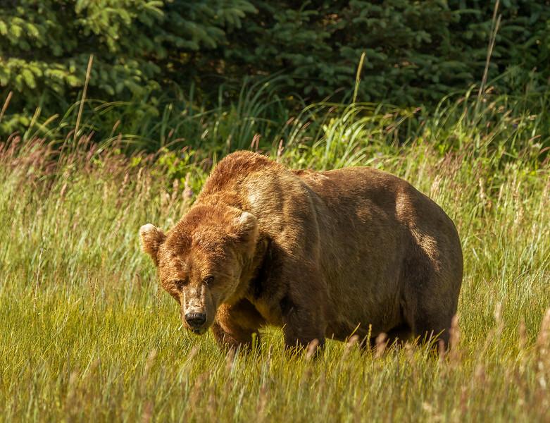 2015-07-17_Bears_Canon7D_5569.jpg