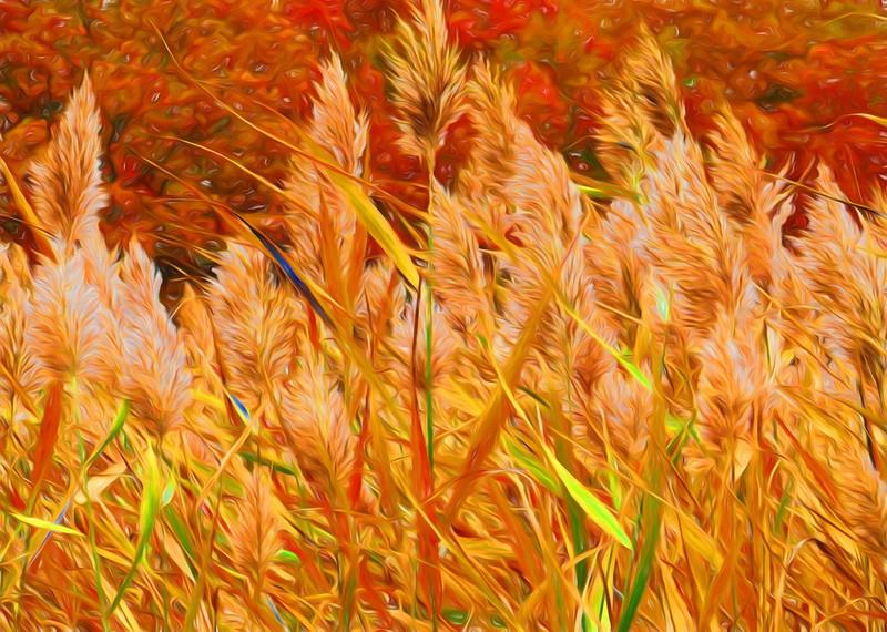 Grasses in the Wind.jpg
