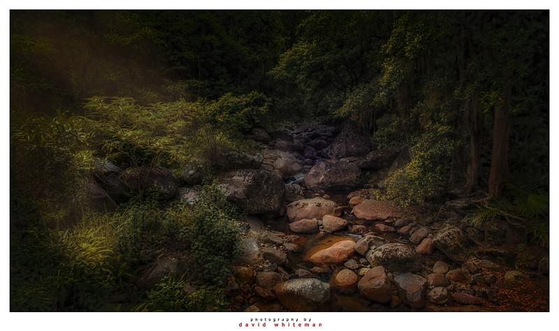 Rainforest Sunbeams on Cedar Creek