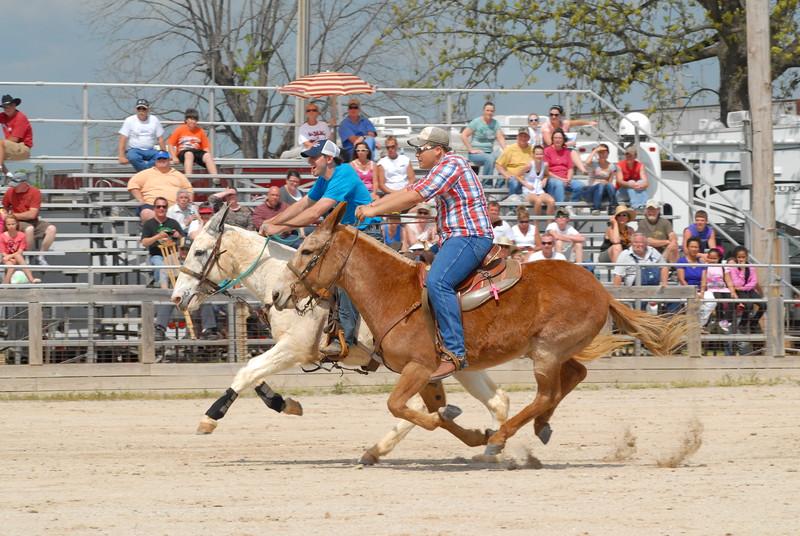 2012 Riding Mule