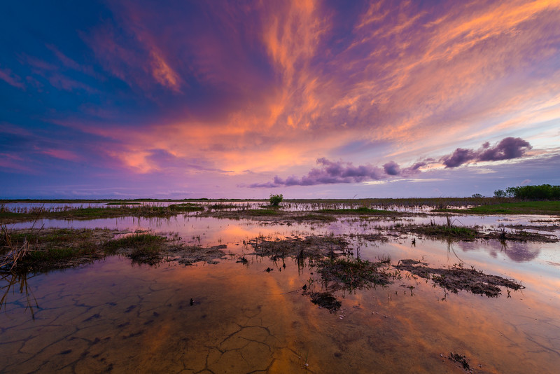 Everglades (5 of 60).jpg