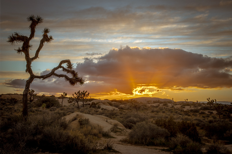 March 10 - Cloudy sunset at Joshua Tree National Park.jpg