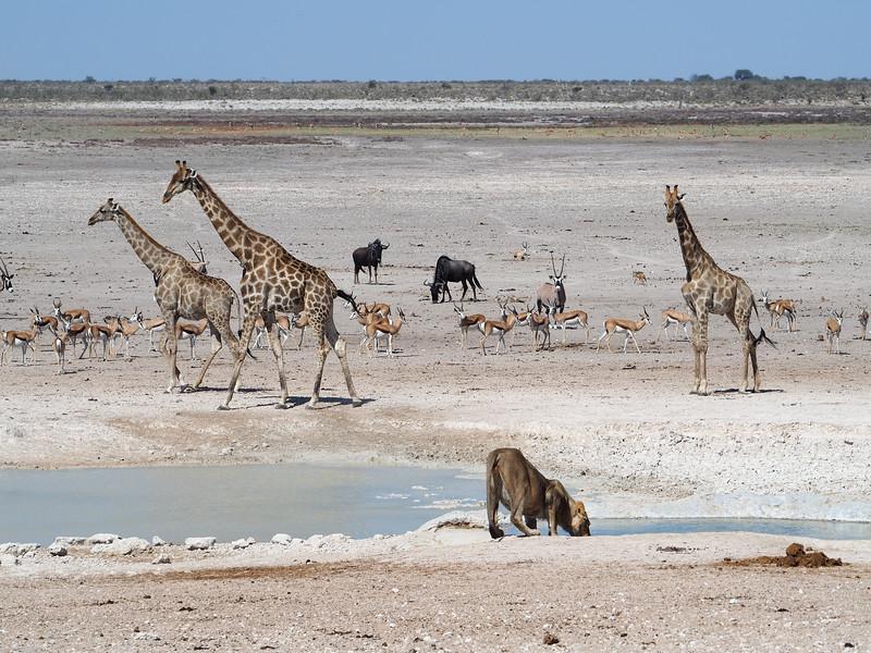 Watering hole in Etosha National Park