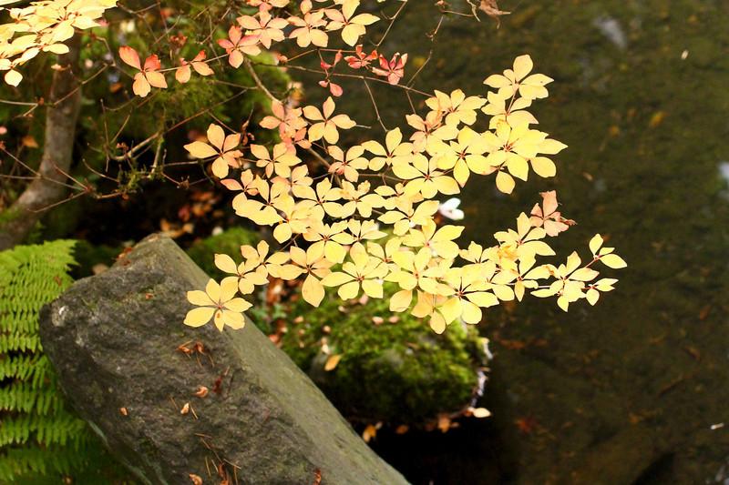Portland Japanese Garden  11-11-11  3507.jpg