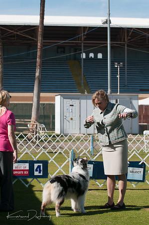 20170205_Australian Shepherds_Lost Dutchman Kennel Club-156.jpg